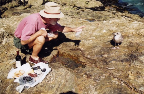 This gull wanted our picnic, Belle Ile, France, late 90's