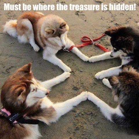 dogtreasure